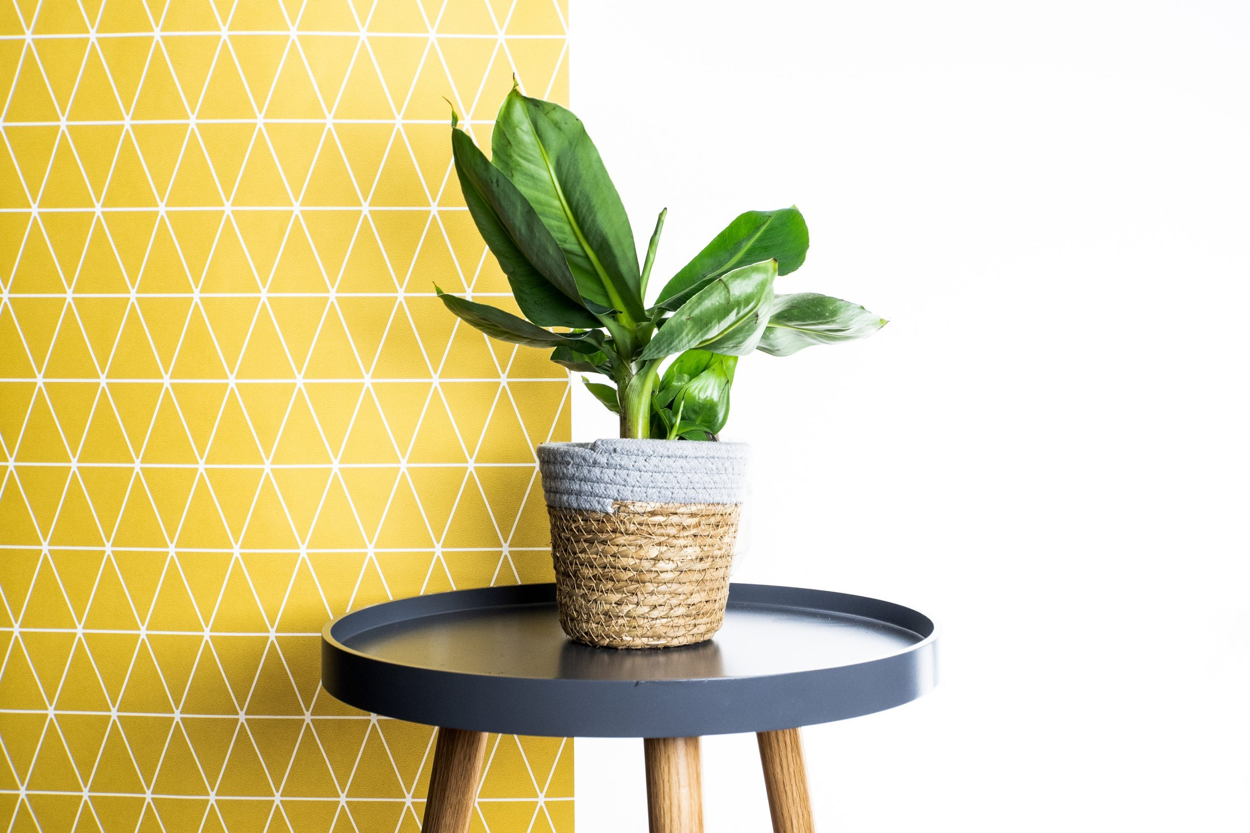 Online House Plants